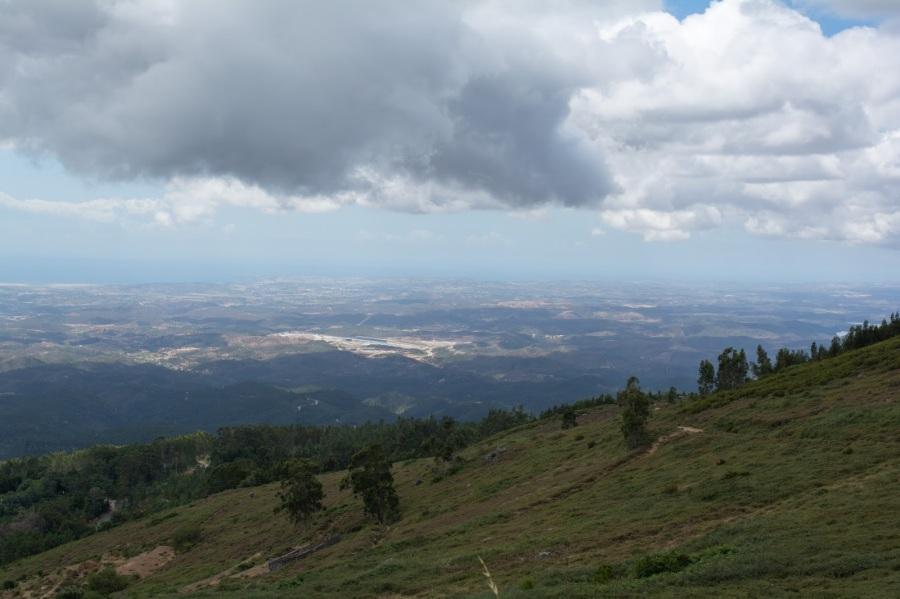 Foia view