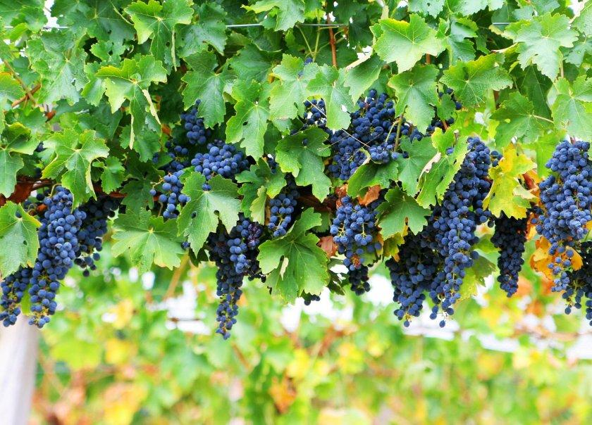 algarve-wines-guide